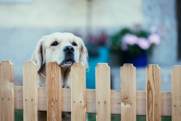 Millennials Want Homes with a Fence for their Dog